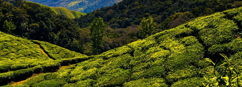 kodaikanal-tour-packages-from-madurai